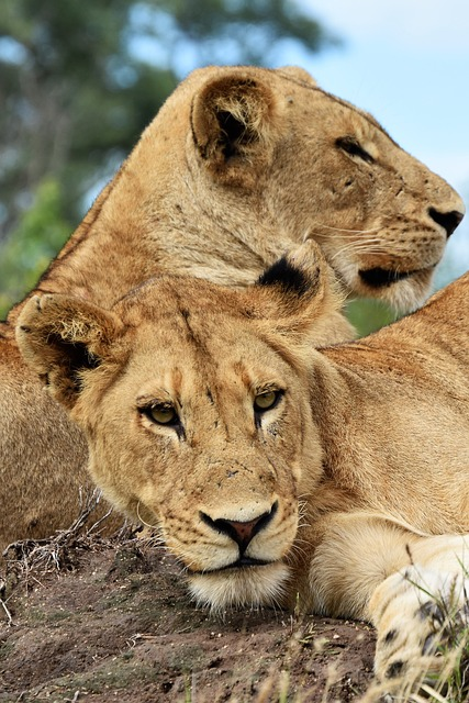 Combined East African Safari Tours