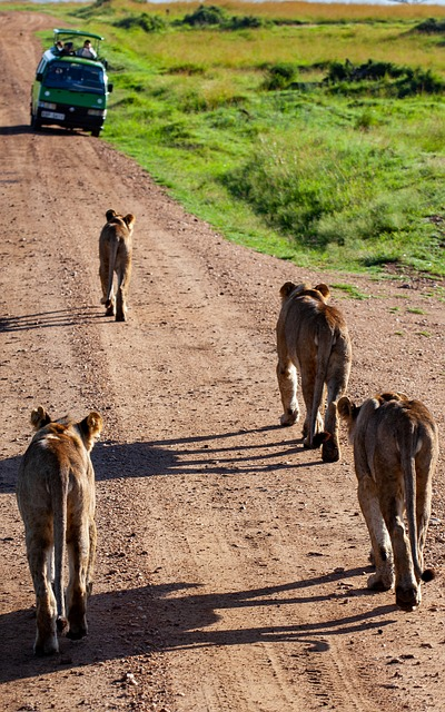 tours to East Africa