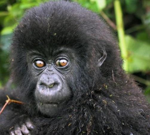 Congo safari tours