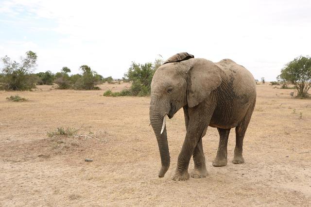 Safaris in Rwanda