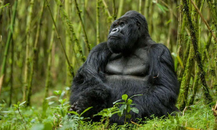 4 Days Double Gorilla Trekking Uganda