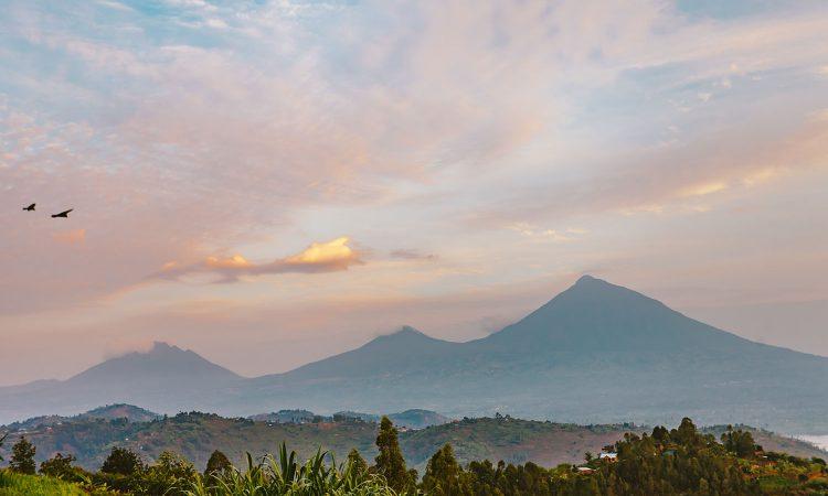 5 Days Uganda Rwanda Gorilla Trek