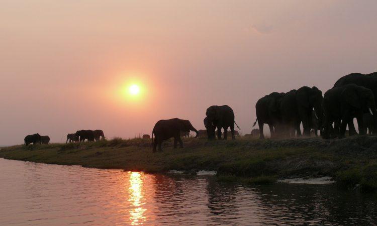 The Northern Circuit Safari of Tanzania