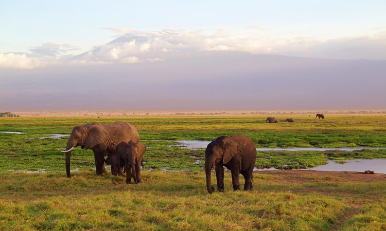 6 Days Kilimanjaro Hike (Rongai Route)