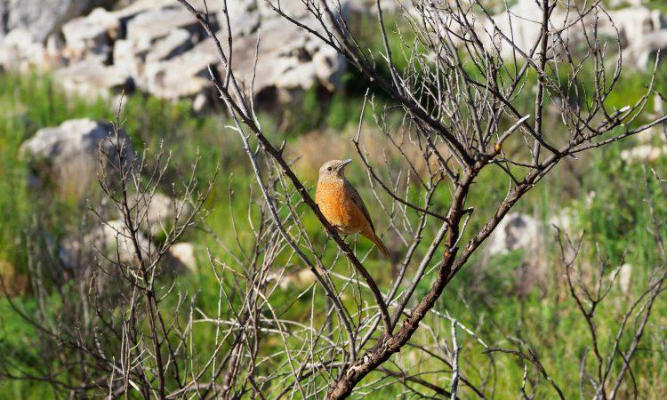 17 Days Albertine Rift Bird Watching Holiday