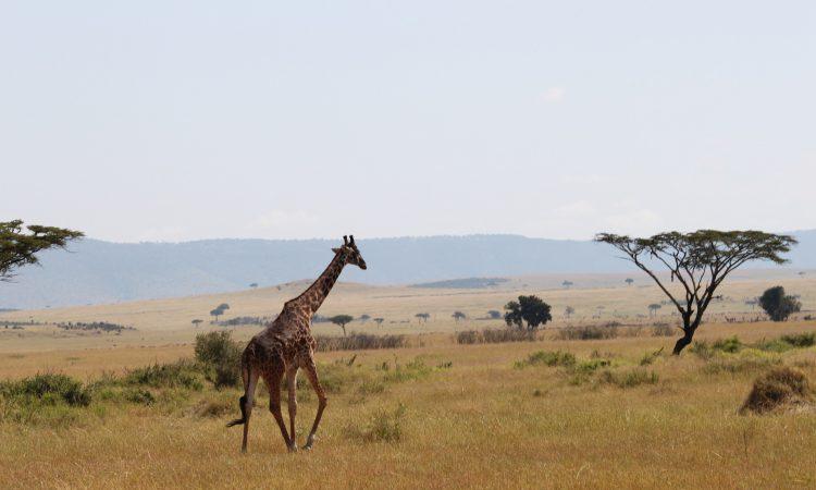 15 Days Kenya Tanzania Safari