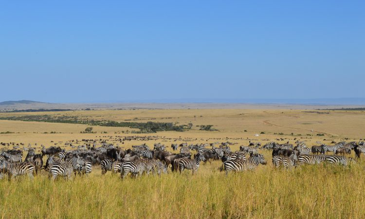 7 Days Majestic Kenya Safari