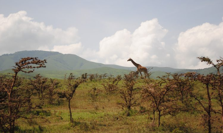14 Days Kenya Wildlife & Beach Holiday