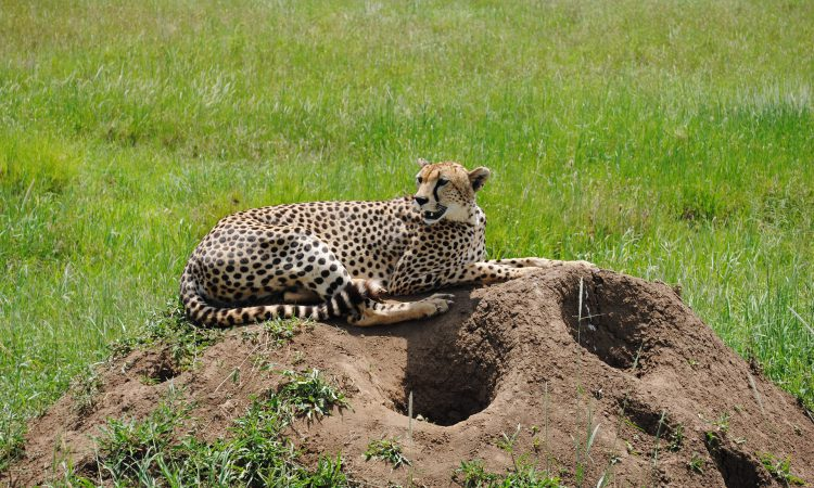 19 Days Big Five Safari in Kenya
