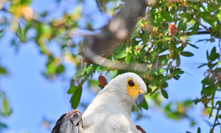 Best birding locations in Uganda