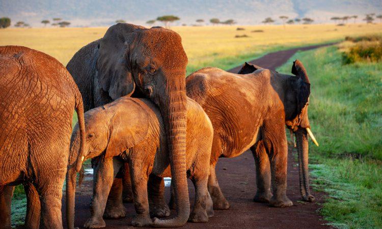 10 Days Best of Rwanda Adventure Safari