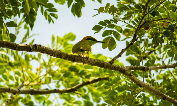 15 Days Best Birding Safari in Uganda