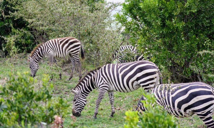 9 Days Uganda Rwanda Safari Holiday