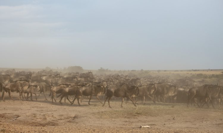 8 Days Exclusive Great Migration Safari