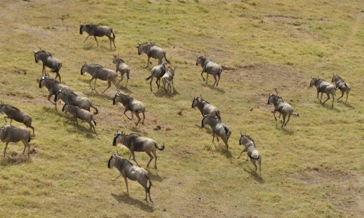 Best Wildebeest Migration Months