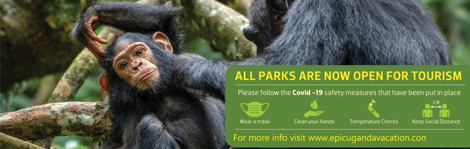 Reduced gorilla permit price